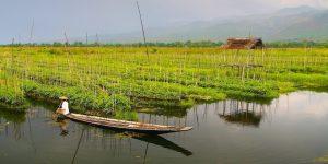 farmer-tendering-the-floating-gardens-in-inle-lake