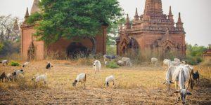 forgotten-temples-in-bagan