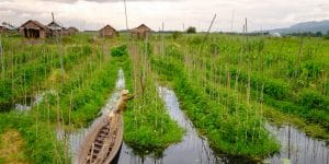 a-farmer-and-his-floating-garden-in-inle-lake