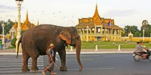 a-mahout-walking-an-elephant-on-the-street-in-phnom-penh