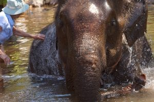 bathing-an-elephant-at-kalaw-green-hill-valley-elephant-camp