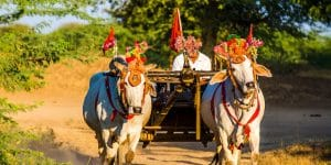 ox-cart-in-festival-decoration