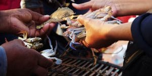 crab-trading-at-local-market-in-kep
