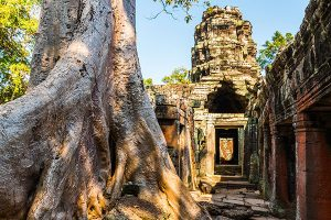 giant-tree-root-at-banteay-kdei