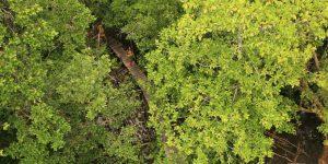 hiking-through-the-mangrove-in-ream