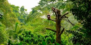 wild-monkeys-in-kep-national-park